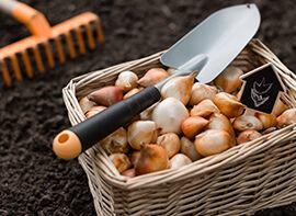 5 Anfängerfehler beim Zwiebelpflanzen vermeiden