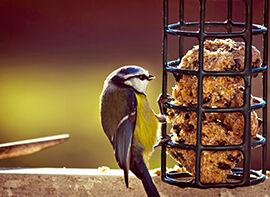 Vögel richtig füttern