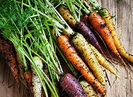Karotten – bunte Vielfalt säen