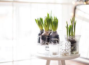Alternative Pflanzgefäße und Vasen