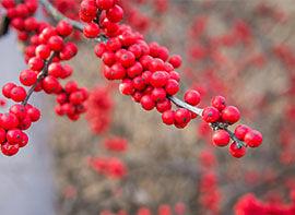 Artenvielfalt im Garten – so kommen Tiere besser durch den Winter