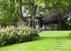Tipps für einen Englischen Rasen