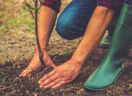 Wie pflanze ich einen Baum richtig?