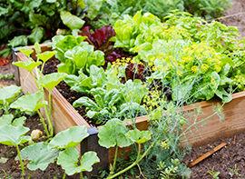 Mischbeete für den kleinen Gemüse- und Obstgarten