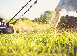 Sommerpflegetipps für Rasen, Dünger und den Obstbaumschnitt