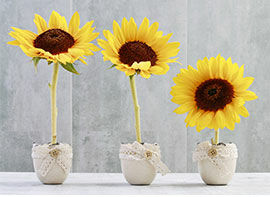 Süße Sonnenblumendeko für den Sommer