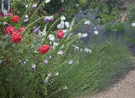 Farbkombinationen im Garten