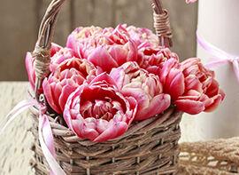 Gefüllte Tulpen im Weidenkorb