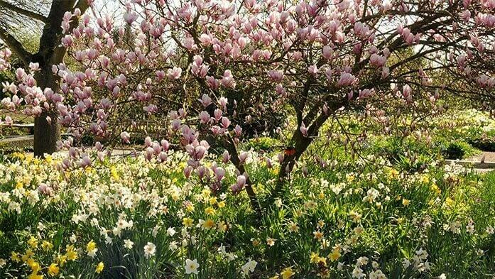 Geliebte Am 25. April ist internationaler Tag des Baumes @YR_19