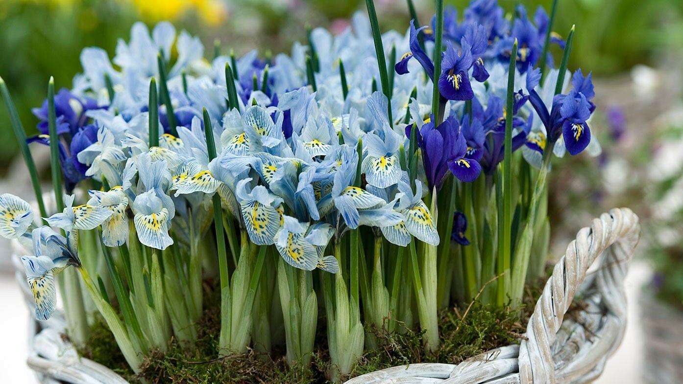 Pflanzentipps Fur Den Garten Im Marz