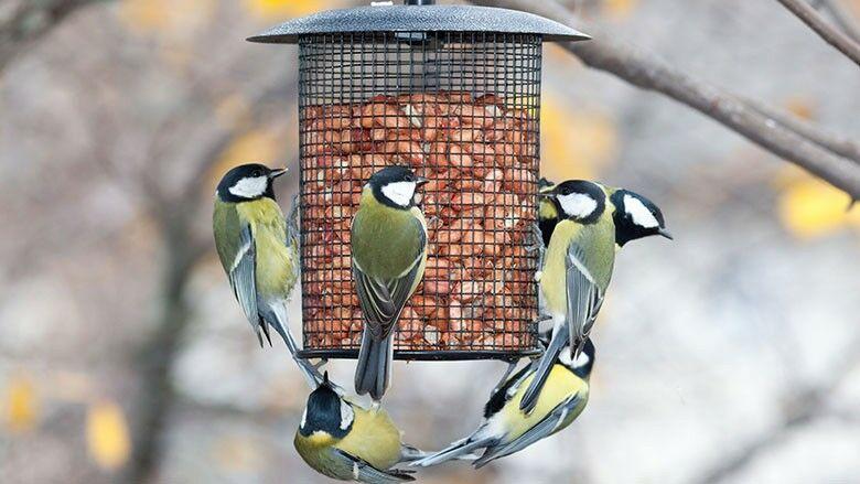monat der vogelfütterung