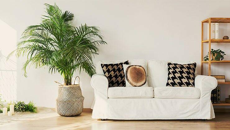 gewinnspiel aus der sommerausgabe 2018. Black Bedroom Furniture Sets. Home Design Ideas