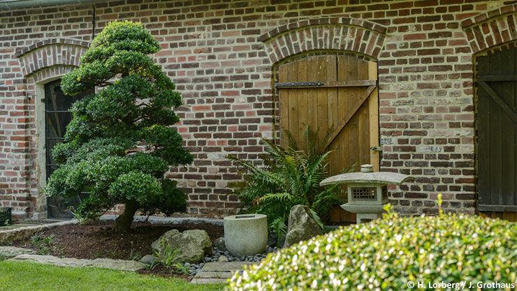 Tipps zum Bonsai-Baum im eigenen Garten