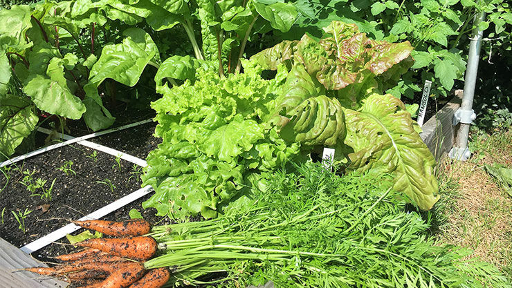Eigenes Gemüse und Kleinobst anbauen