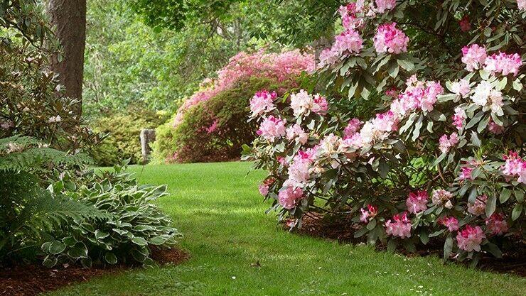 Rhododendren zeigen ihre Pracht von Januar bis August