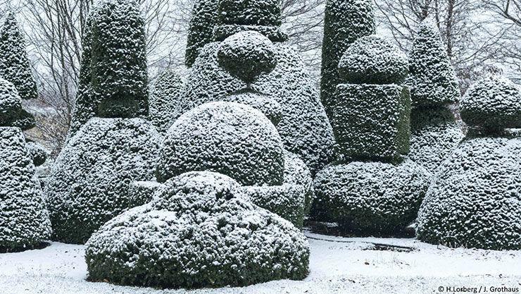 Winterharte Pflanzen Als Sichtschutz