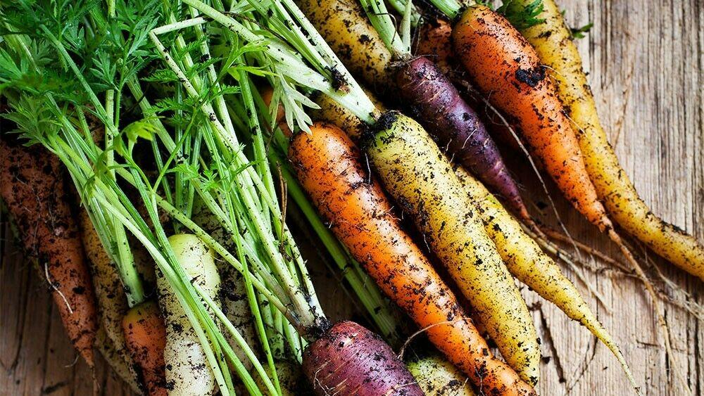 Prächtig Karotten säen #OT_25
