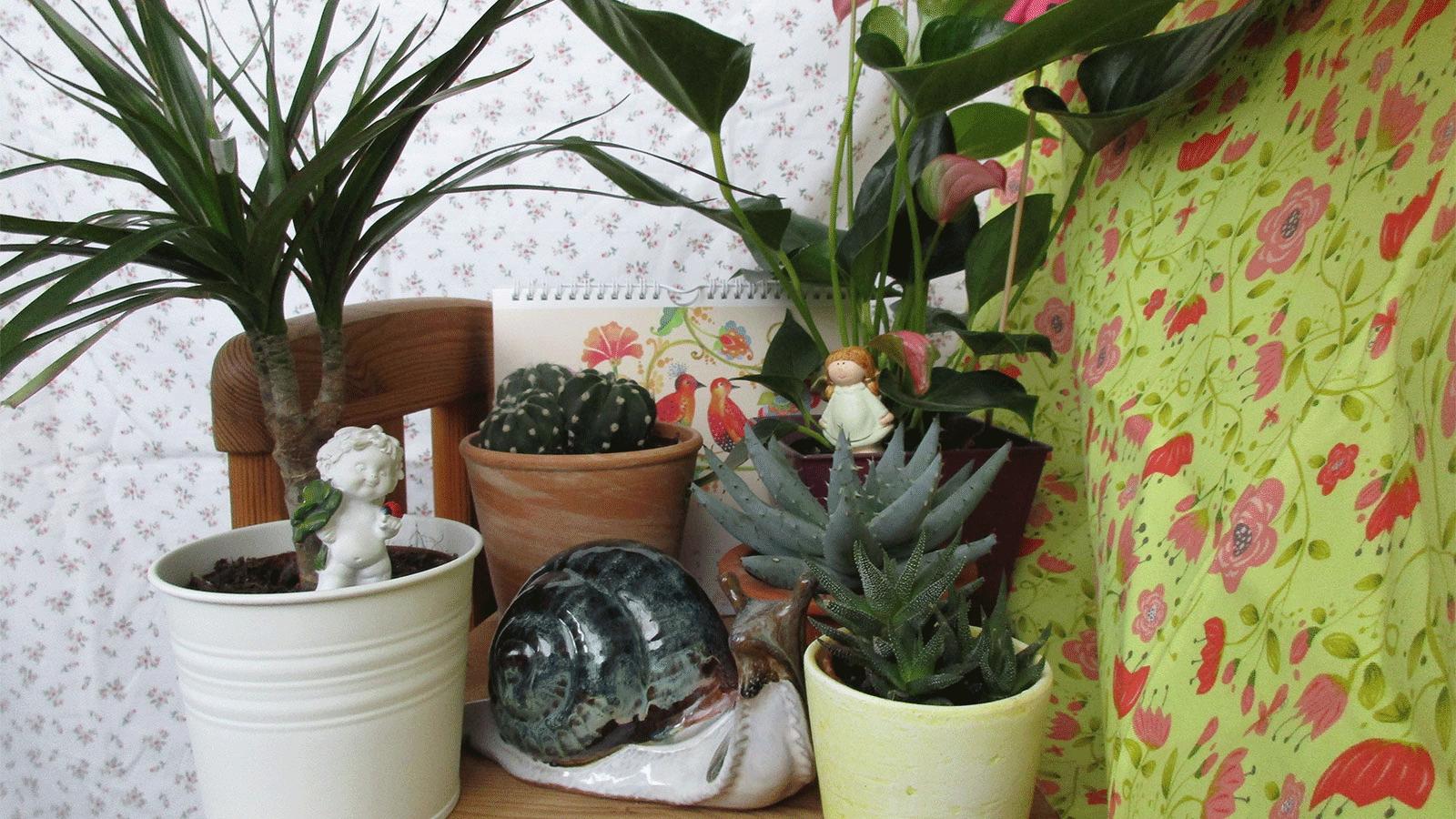 deutschlands schönste zimmerpflanze