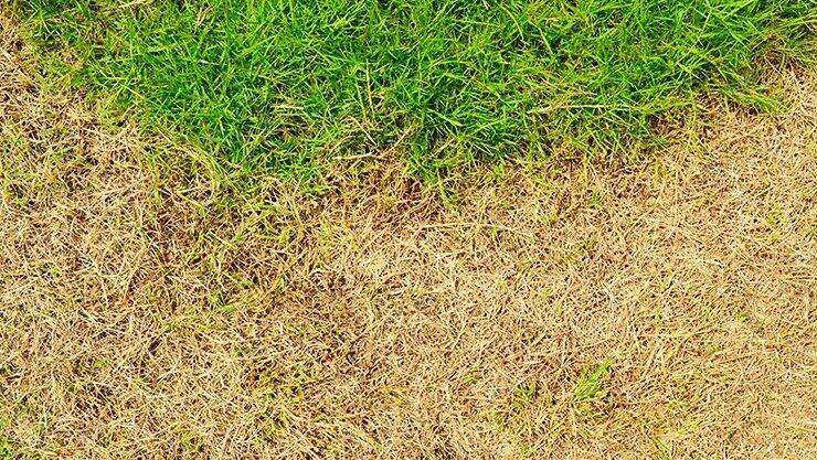 Braune Stellen im Rasen, was nun?
