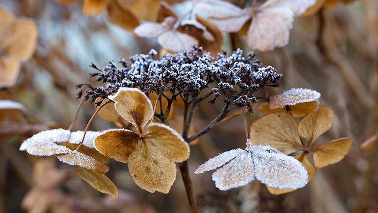Attraktive Winterpflanzen
