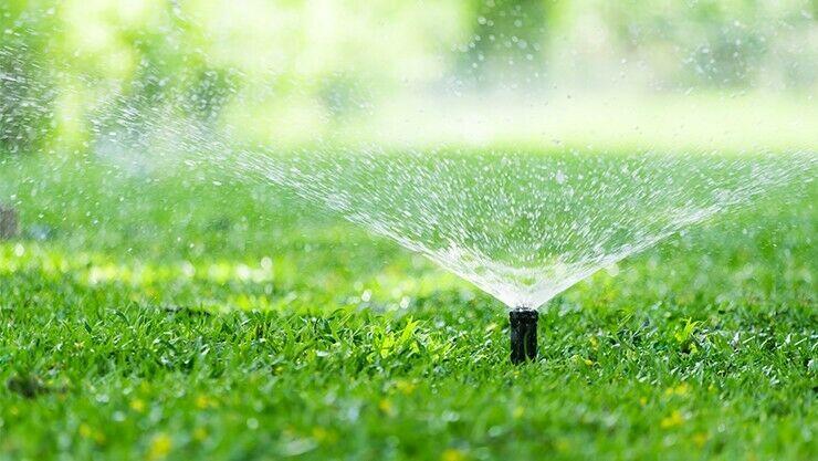 Ein gepflegter Rasen ist der beste Schutz gegen den Gartenlaubkäfer