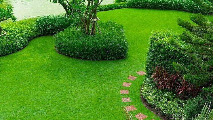 Grüner, gesunder Rasen