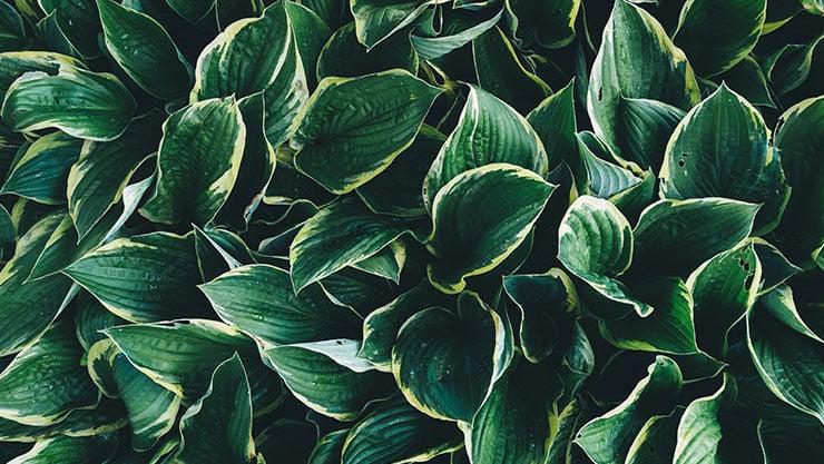 ein Garten ganz in grün