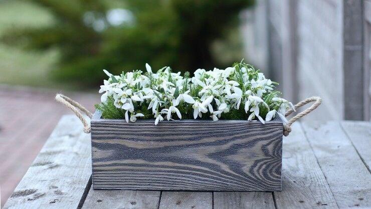 pflanzen sie jetzt die blumenpracht des kommenden fr hjahrs. Black Bedroom Furniture Sets. Home Design Ideas