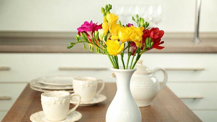 Fressien als Schnittblumen in einer Vase