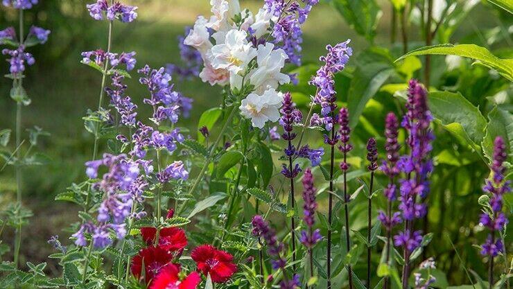 Blumenauswahl für das Wildblumenbeet