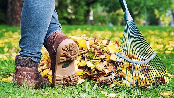 Laub entsorgen im Oktober