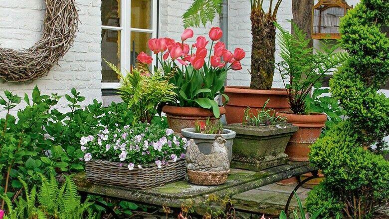 Exotische Pflanzen auf Tisch