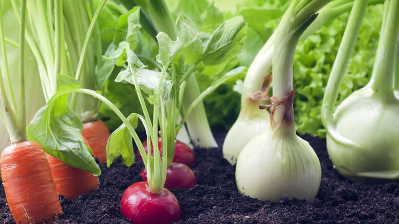 Gemüseanzucht
