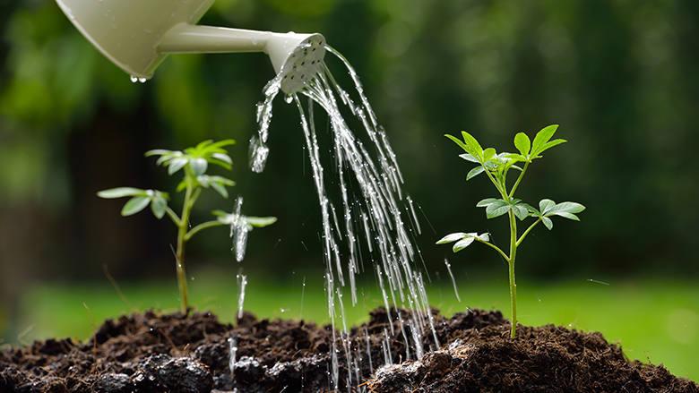 Die richtige Bewässerung